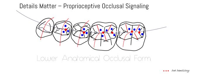 gnm-occlusal-signalling